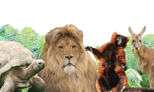 Linton Zoo
