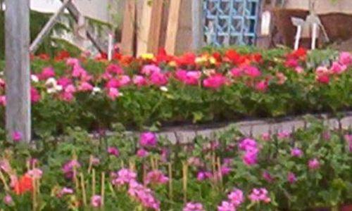 Dutch Garden Centre