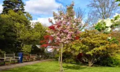 Swansea Botanical Gardens